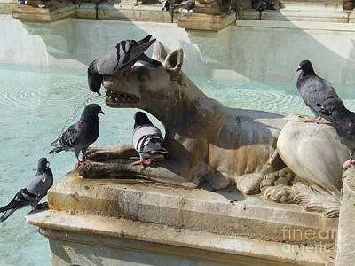 Photograph - Pigeons And Fountain - Siena by Phil Banks
