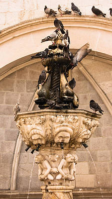 Photograph - Pigeons Drinking From The Little Onofrio Fountain On A Summer Morning In Dubrovnik by Weston Westmoreland