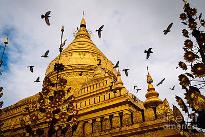 Photograph - Pigeons Flying Over Shwezigon Pagoda by Dean Harte