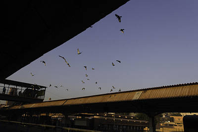 Pigeons Flying Over The Jodhpur Train Station Art Print