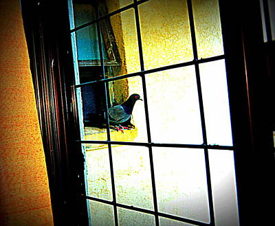 Photograph - Pigeons Form My Window-11 by Anand Swaroop Manchiraju