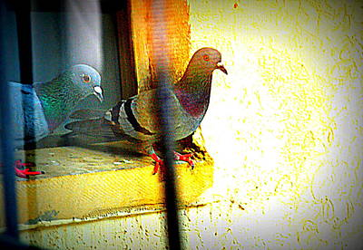 Photograph - Pigeons Form My Window-12 by Anand Swaroop Manchiraju
