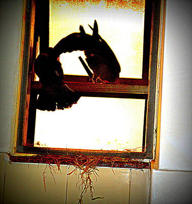 Photograph - Pigeons Form My Window-5 by Anand Swaroop Manchiraju