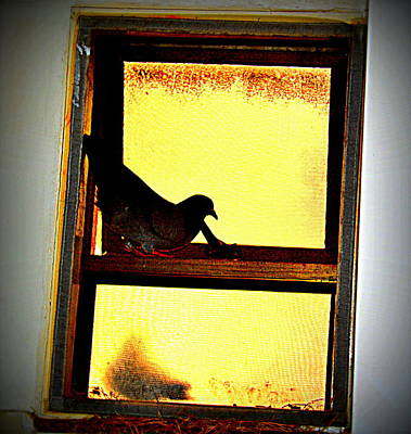 Photograph - Pigeons Form My Window-6 by Anand Swaroop Manchiraju