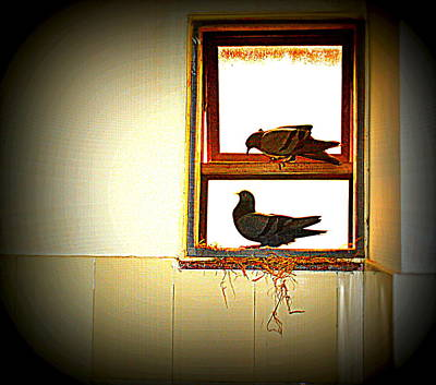 Photograph - Pigeons Form My Window-8 by Anand Swaroop Manchiraju