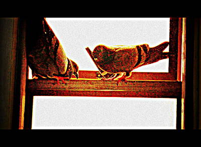 Photograph - Pigeons Form My Window-9 by Anand Swaroop Manchiraju