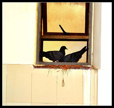 Photograph - Pigeons From My Window-1 by Anand Swaroop Manchiraju