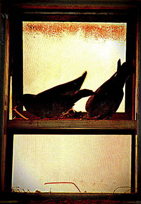 Photograph - Pigeons From My Window-4 by Anand Swaroop Manchiraju