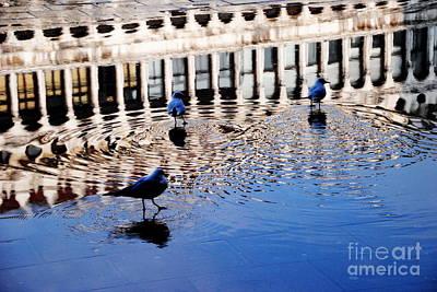 Photograph - Pigeons In Aqua Alta by Jacqueline M Lewis
