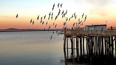 Photograph - Pigeons In Flight by Janice Drew