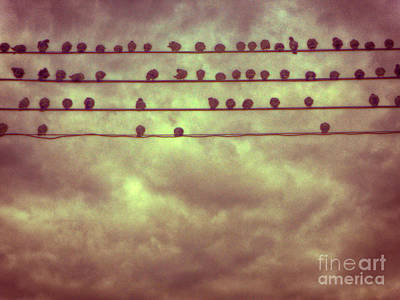 Photograph - Pigeons by Mark Thomas