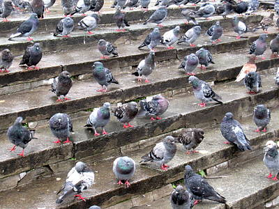 Michael Fitzpatrick Photograph - Pigeons by Michael Fitzpatrick