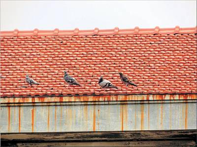 Art Print featuring the photograph Pigeons On Roof by Aaron Martens