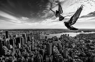 Pigeon Photograph - Pigeons On The Empire State Building by