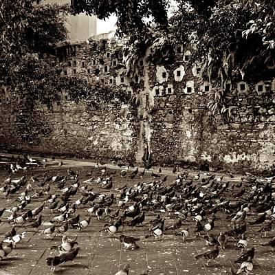 Photograph - Pigeon's Park by Ricardo J Ruiz de Porras