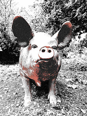 Photograph - Piggie by Richard Reeve