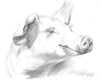 Drawing - Piggy  by Alena Nikifarava
