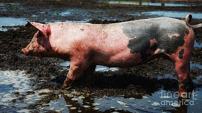 Mellow Yellow - Piglet standing in the mud by Nick  Biemans