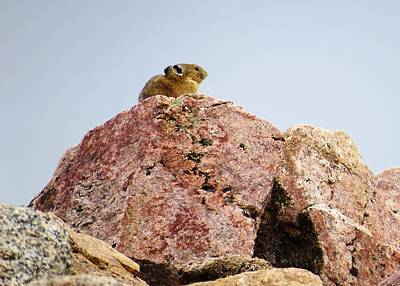 Photograph - Pika Outlook by Nina Donner