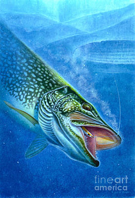 Northern Pike Fish Painting - Pike And Ice Fishing by Jon Q Wright