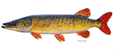 Pickerel Painting - Pike by Carey Chen