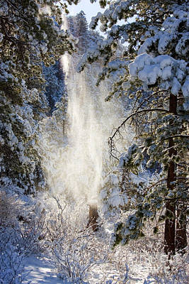 Steven Krull Royalty-Free and Rights-Managed Images - Pike National Forest Snow by Steven Krull