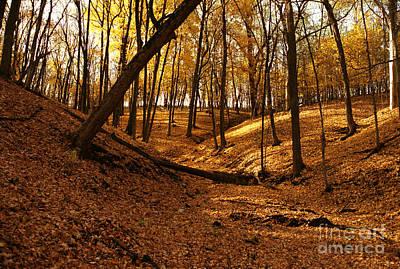 Photograph - Pikes Peak Park Yellow Fall by Joan Liffring-Zug Bourret