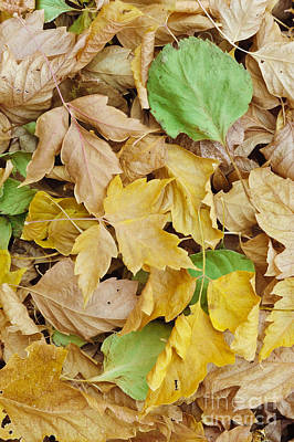 Photograph - Pile Of Autumn Leaves by John Shaw