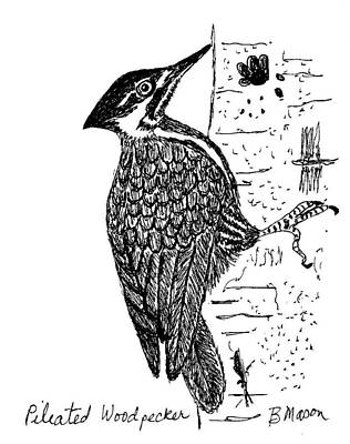 hairy woodpecker drawing 65236 vizualize
