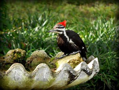 Pileated Woodpecker II Art Print by Lynn Griffin