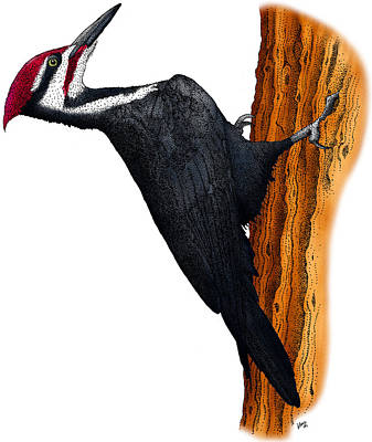 Pileated Woodpecker Art Print by Roger Hall