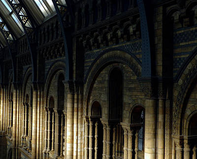 Natural History Museum London Photograph - Stream Of Light - Pillars Of Life by Connie Handscomb