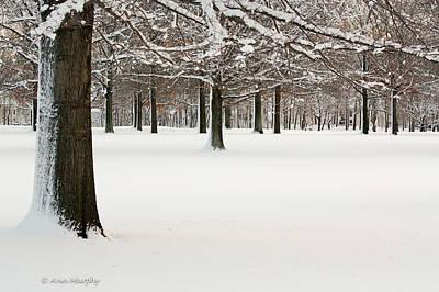 Pin Oaks Covered In Snow Art Print by Ann Murphy