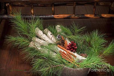 Stephen Stills Photograph - Pine And Birch by John Stephens