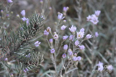 Photograph - Pine And Wild Flowers by Robin Maria Pedrero