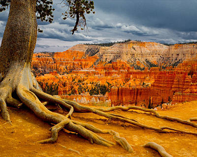 Photograph - Pine At Bryce by Jim Snyder