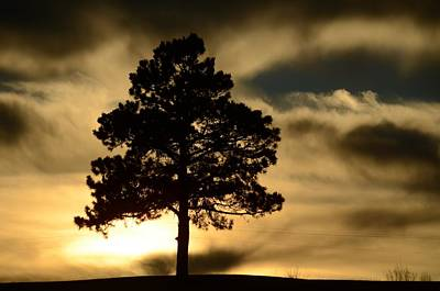 Photograph - Pine At Sundown by Dakota Light Photography By Dakota