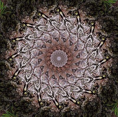 Photograph - Pine Bark Mandala #1 by Beth Sawickie