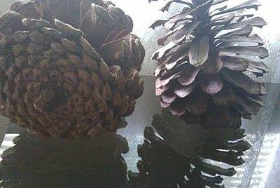 Photograph - Pinecone 2 by B L Qualls