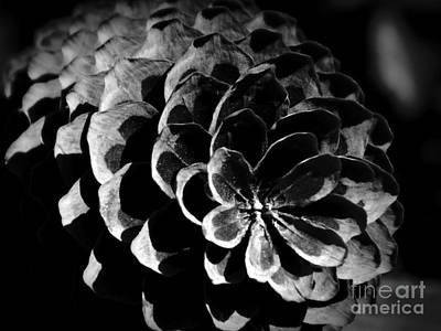 Photograph - Pine Cone Bw Remastered by Chalet Roome-Rigdon