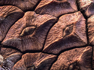 Photograph - Pine Cone Closeup by Jean Noren