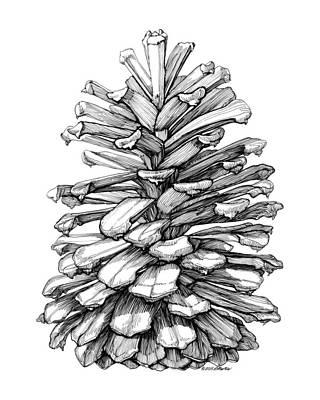 Pine Cones Drawing - Pine Cone by Elizabeth Martin