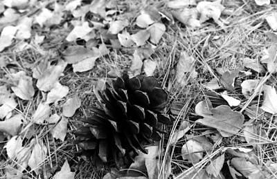 Pine Cone Original by Karl Rose