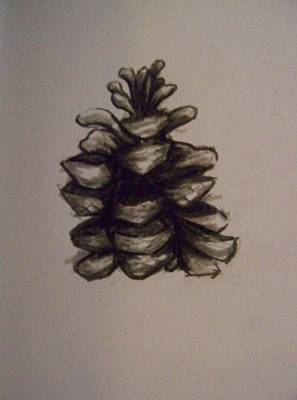 Pine Cone Print by Molly Grover