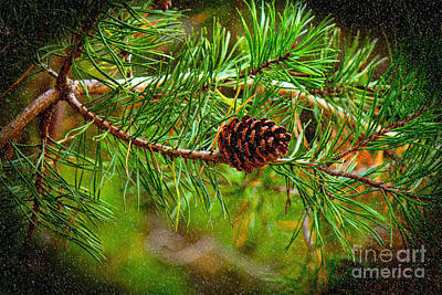 Photograph - Pine Cone by Sandra Clark