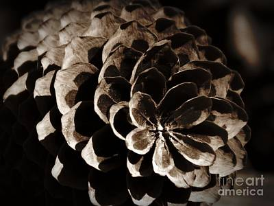 Photograph - Pine Cone Sepia Remastered by Chalet Roome-Rigdon