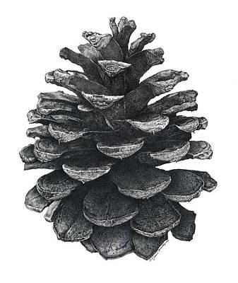 Nature Study Digital Art - Pine Cone by William Beauchamp