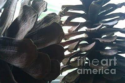 Photograph - Pinecones 1 by B L Qualls