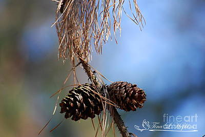 Photograph - Pine Cones 20120317_190a by Tina Hopkins