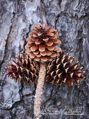 Photograph - Pine Cones 20120415_84a by Tina Hopkins